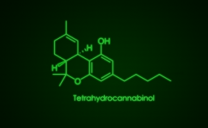 how long does thc stay in your system